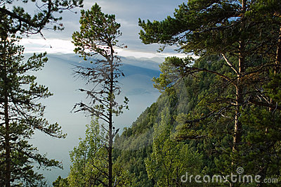 Trees on the mountain of Sognefjord, Norway