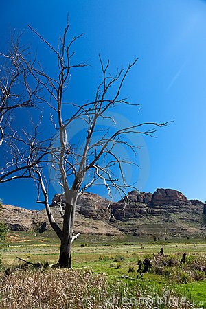 Trees and mountains in South Africa