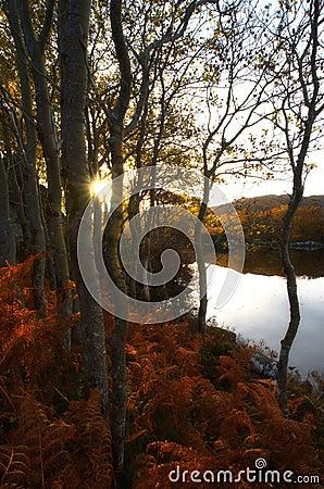 Trees near pond shore