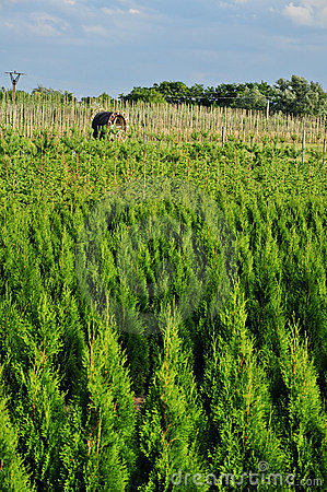Trees nursery plantation