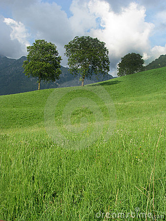 Free Trees On The Hill Royalty Free Stock Photography - 6412057