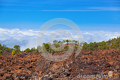 Trees over clouds at volcano Teide in Tenerife island - Canary