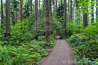 Trees - Pacific Spirit Park