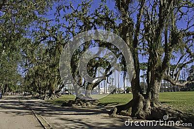 Trees in the park - São José dos Campos - Brazil