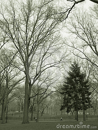 Trees in park in sepia