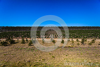 Trees Plantations Young Mature