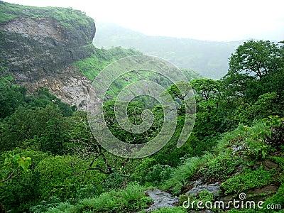Trees in rainy valley