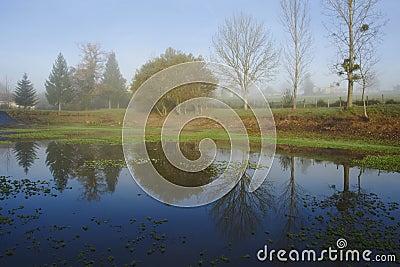 Trees reflecting on lake