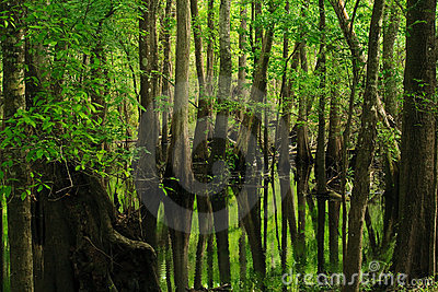 Trees reflecting on marsh