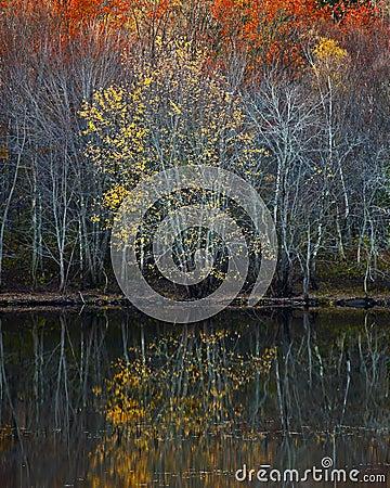 Free Trees Reflections Autumn Stock Photo - 57292290