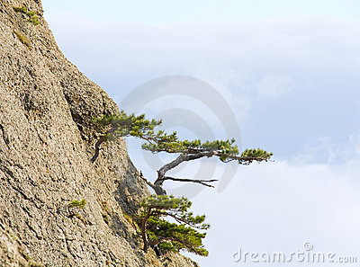 Trees on rocks slope