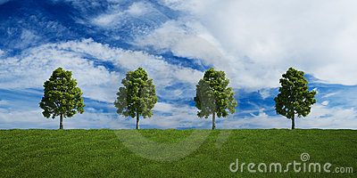Trees on a row with summer clouds