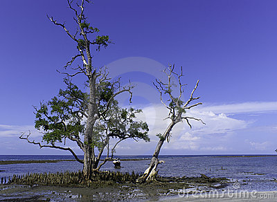 Trees on sandy coastline