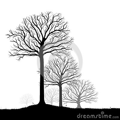 Trees Silhouette, Black White Vector