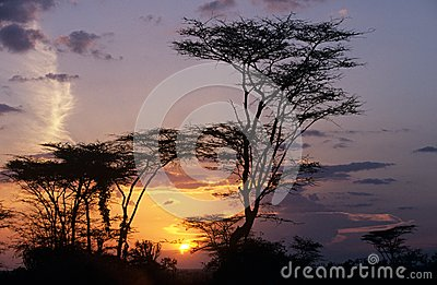 Trees silhouetted against the sun. Editorial Stock Photo