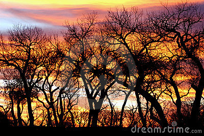 Trees silhouetted at sunset