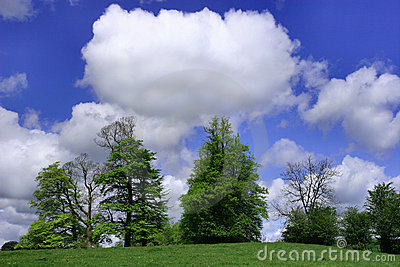 Trees, Sky and Puffy White Clouds