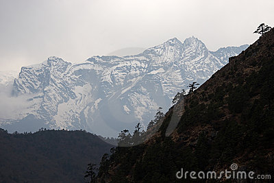 Trees at steep slope and snow mountain, Himalayas