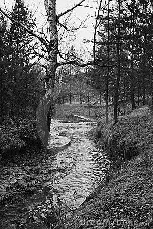 Trees, stream, spring