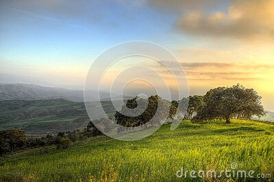 Trees Surrounded By Green Grass Field During Daytime Free Public Domain Cc0 Image