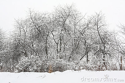 Trees under the snow