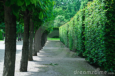 Trees and vegetative fences in a classical garden