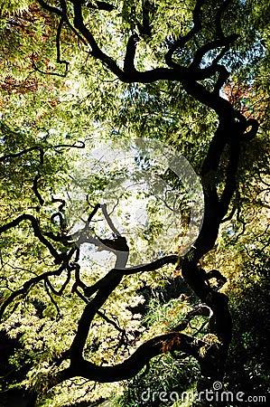 Free Trees View Upwards Stock Image - 3525021