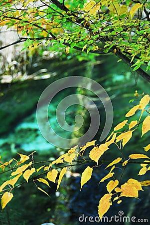 Trees and Water in Autumn Jiuzhai