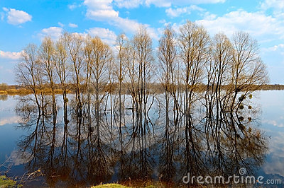 Trees in water-meadow