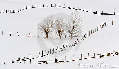 Trees in winter time and fences