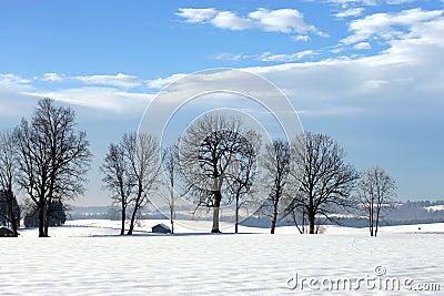 Trees in the wintersun