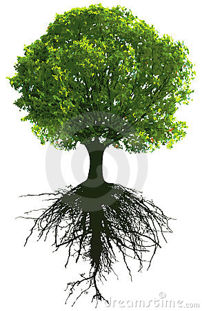 Free Trees With Roots Royalty Free Stock Images - 16832029