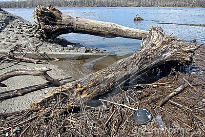 Trees and Wood Debris after Delaware River Flood Editorial Photo