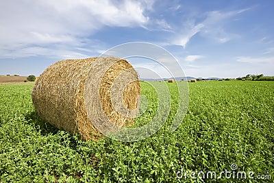 Trefoil bale in field