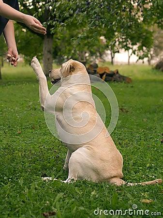 Treinamento do cão
