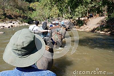 Trekking with elephants