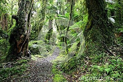 Trekking in Green paradise
