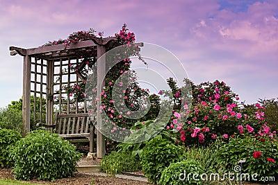 Trellis Blooming Pink Roses Garden Landscape