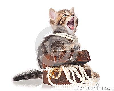 Trendig kattunge