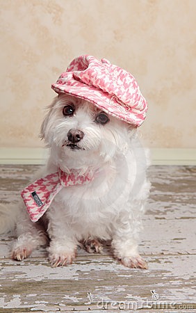 Free Trendy Cute Dog Royalty Free Stock Photography - 24259947