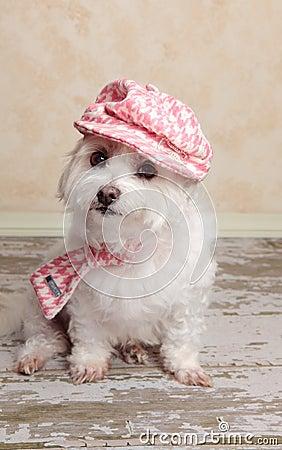 Trendy cute dog