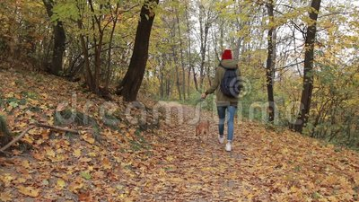 Trendy hipster girl walking the dog in autumn park stock video footage