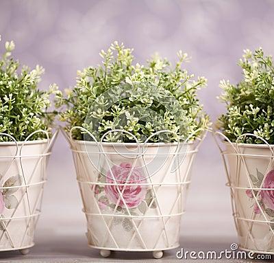 Tres plantas en macetas adornadas imagenes de archivo for Fotos de plantas en macetas