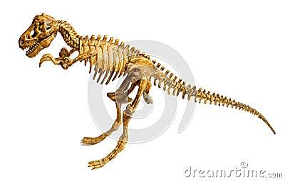 Trex skeleton isolated on white