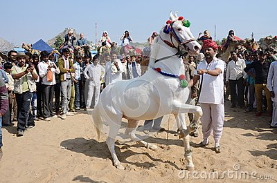 Tribal nomad man taking part at horse dance competition,Pushkar,India
