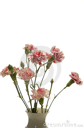 Tribute of carnations