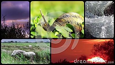 Tributo dos animais selvagens, montagem vídeos de arquivo