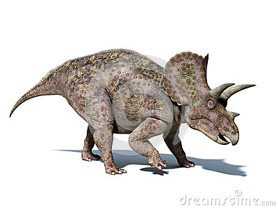 Triceratops dinosaur, isolated at white background, with clipping path.