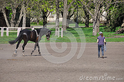 The trick with horse Editorial Stock Image