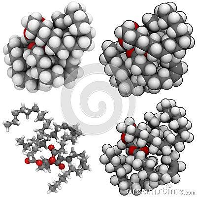 Triglyceride (animal fat)